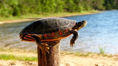Turtles and Fence Posts: Sometimes We All Need a Hand